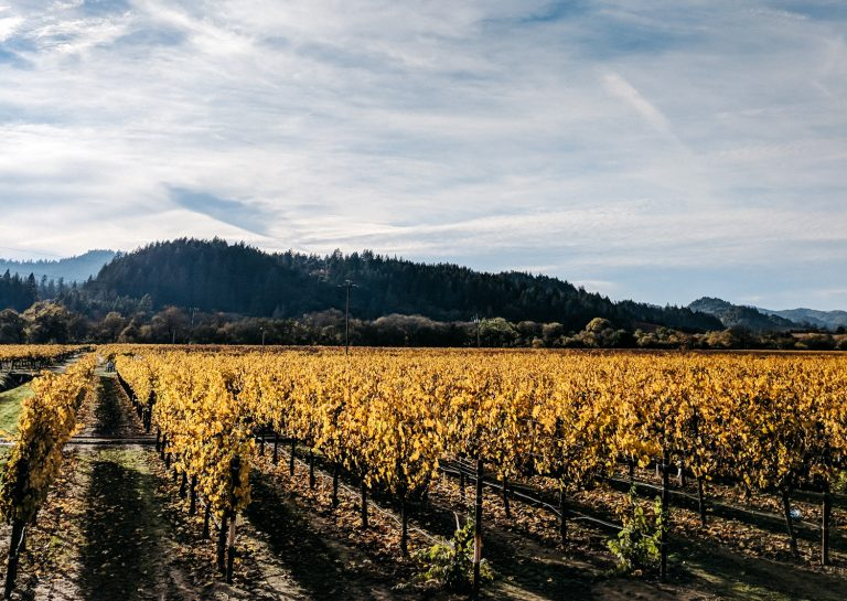 Healdsburg, CA weekend guide | The Stopover