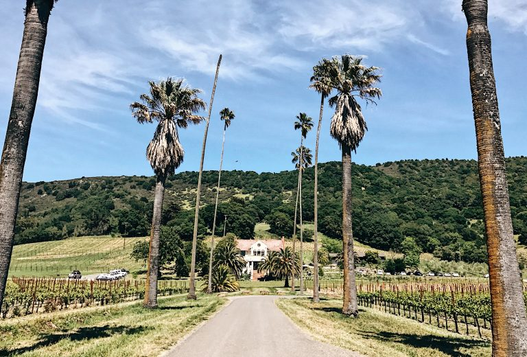 Travel blogger Meaghan Murray shares a review for Scribe Winery in Sonoma, CA on her blog The Stopover